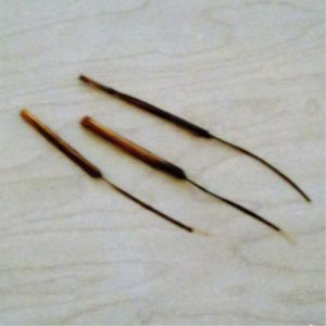 yucca brushes