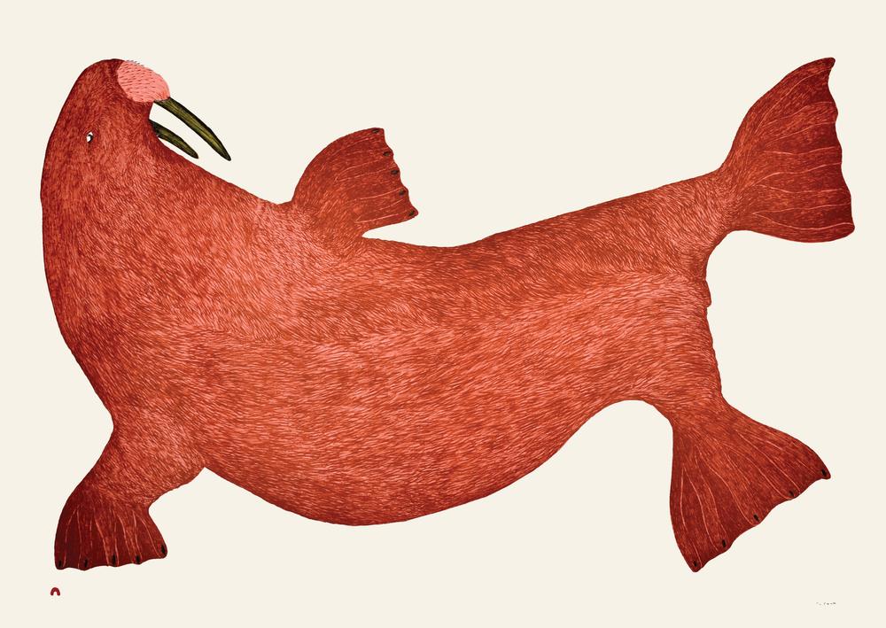 2-red-walrus